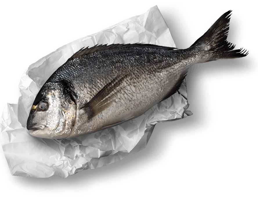 fish-on-paper.png